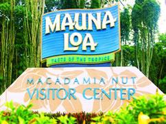 Mac Nut Farm Tour Big Island