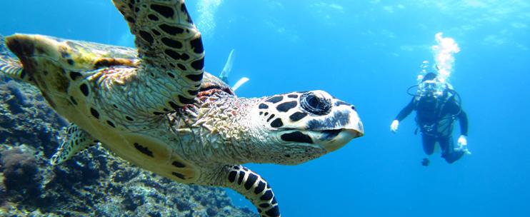 Dive Hawaii Maunalua Bay 91