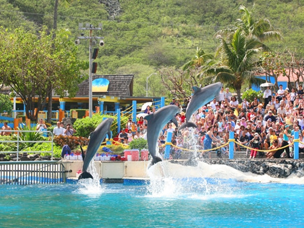 Sea Life Park General Admission And Chief S Luau Combo