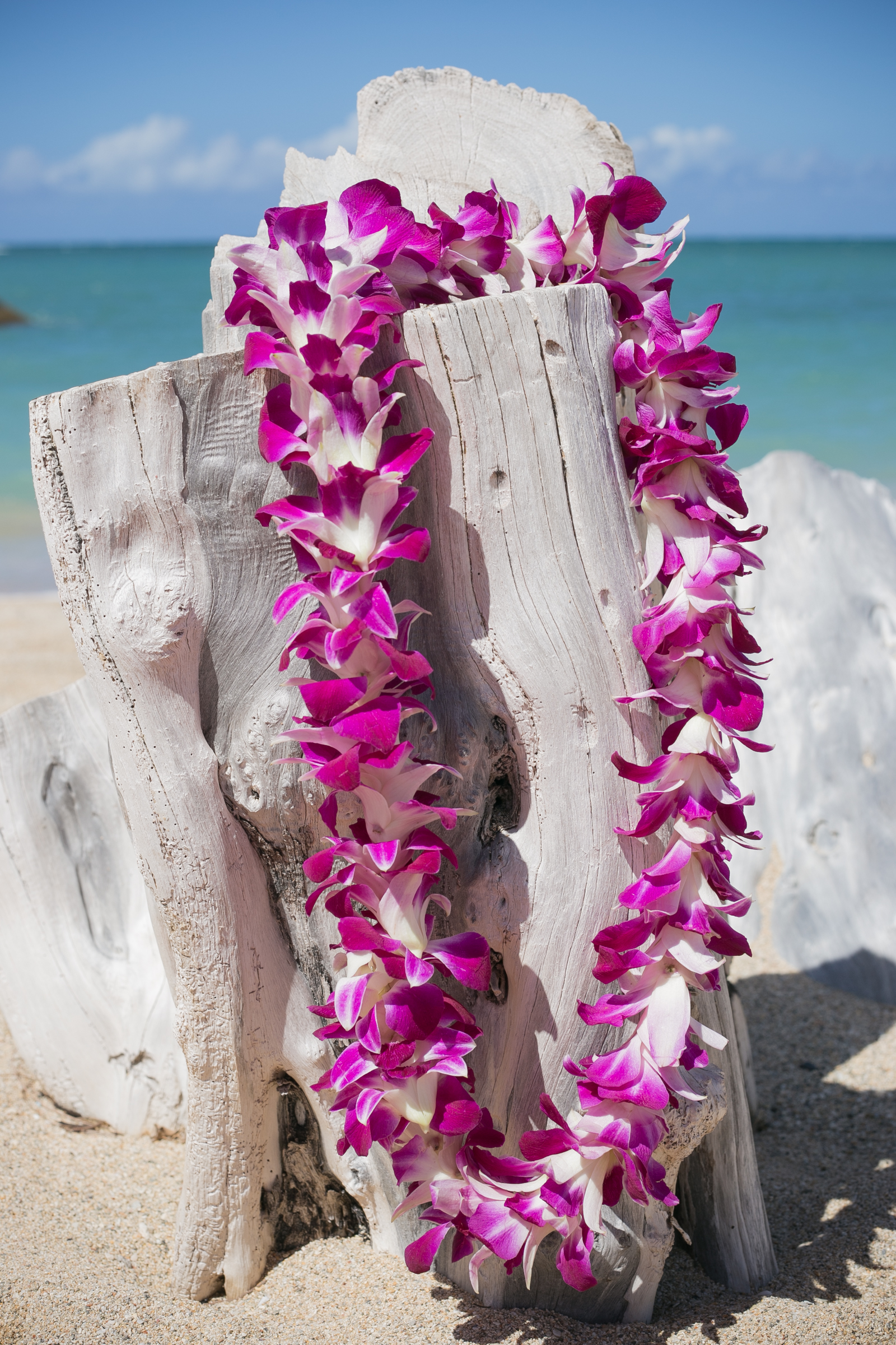maui lei greetings at kahului airport   hawaii discount