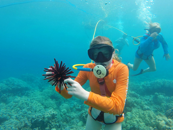 Hawaii Snorkeling Tours. Don't need a mask and snorkel to explore Hawaii's fascinating underwater world. Hawaii's year-round warm ocean temperatures, the islands' crystal clear waters and the abundant marine life are a snorkeler's dream.