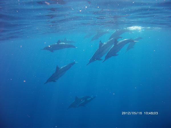 Anelakai Adventures - Keauhou Bay Kayak Tour - Hawaii Discount