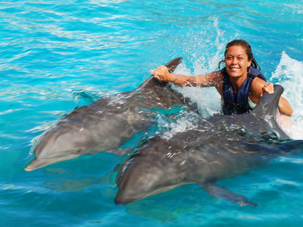 Sea Life Park Dolphin Royal Swim Hawaii Discount