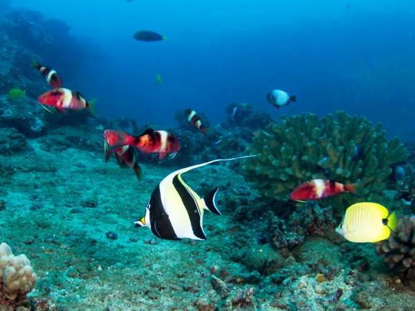 Seasport Divers - Morning Two Tank Dive - Hawaii Discount