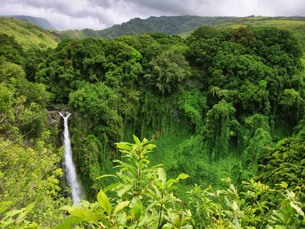 Pineapple Express Tours Hilo
