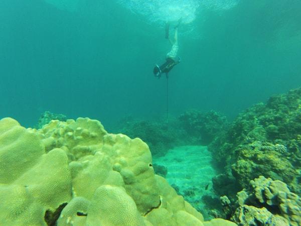 Lopaka 39 s aloha adventures spearfishing hawaii discount for Edible hawaiian fish