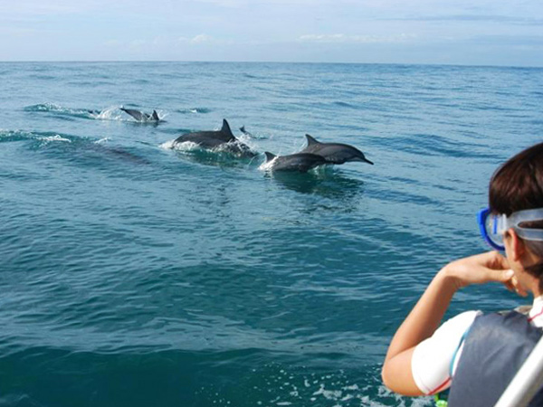 the dolphins in honolulu Swimming with wild dolphins in oahu, hawaii is an unforgettable travel experience a half day sail and snorkel tour with wild side specialty tours is recommended.