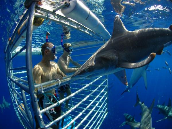 Hawaii Shark Encounters On Oahu Hawaii Discount