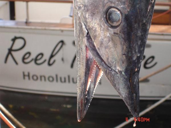 Reel Intense Sportfishing Hawaii Discount