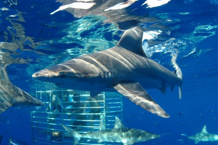 Shark Cage Tours Kauai