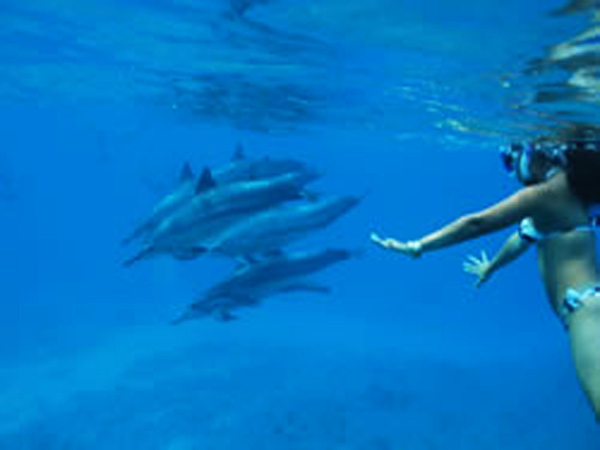 Swim With Dolphins In Oahu