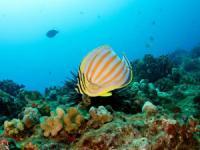 Seasport Divers - Open Water Certification - Hawaii Discount