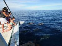 Ocean Sports - Dolphin Watch Adventure - Hawaii Discount