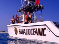 The Dolphin Dreaming Wild Dolphin Swim - Hawaii Discount