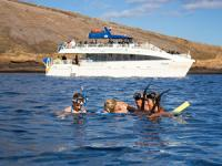 pacific whale foundation molokini wild side snorkel