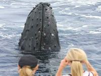 Lahaina Cruise Company - Whale Watch Excursion - Hawaii Discount