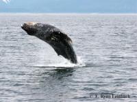 Neptune Charlies - Big Island Whale Watch Adventure - Hawaii Discount