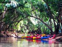Wailua River Kayak tours