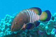 Kaanapali Sportfishing