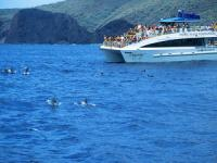 Pacific Whale Foundation - Lanai Snorkel & Dolphin Watch - Hawaii Discount