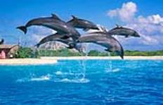 Sea Life Park General Admission Ticket - Hawaii Discount