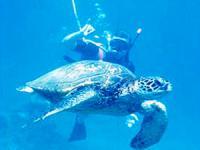 Aqua Adventures - Snuba & Snorkel - Hawaii Discount