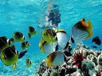 Hilo Ocean Adventures - Beach Snorkel - Sea Turtle & Black Sand Lagoon - Hawaii Discount