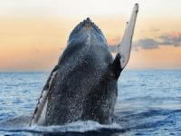 Big Island of Hawaii Whale Watching tours