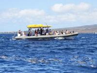 Maui Adventure Cruises - Lanai Dolphin Adventure - Hawaii Discount