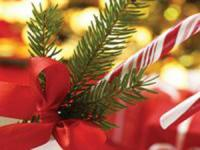 Pacific Whale Foundation - Christmas Brunch Cruise - Hawaii Discount
