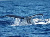Whale Watch Adventure