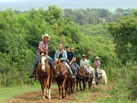 Hawaii Horseback Riding Tours