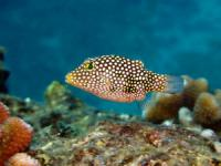 Seasport Divers - Open Water Referral Program - Hawaii Discount