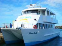 Dolphin Star - Wild Dolphin Watch - Hawaii Discount
