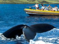 Pacific Whale Foundation Whale Watch Lahaina Raft - Hawaii Discount