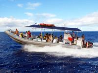 Ko Olina Ocean Adventures - Oahu Snorkeling & Dolphin Encounter - Hawaii Discount