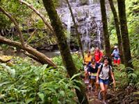Hawaii Forest & Trail - Kohala Country Falls - Hawaii Discount