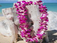 Hawaiian Flower Lei Greeting at Honolulu Airport