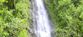 guided manoa falls hike