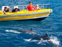 Pacific Whale Foundation Maui Dolphin Watch Raft Tour - Hawaii Discount