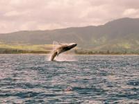 North Shore Catamaran - Whale Watching Cruise - Hawaii Discount