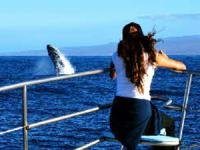 Ocean Sports - Wake Up with the Whales - Hawaii Discount