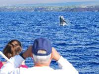 Ocean Sports - Signature Whale Watch - Hawaii Discount