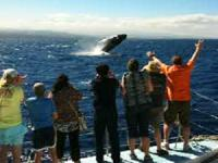 Ocean Sports - Sail with the Whales - Hawaii Discount
