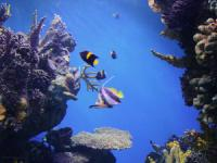 Reefdancer Glass Bottom Boat Tour – 1 hour - Hawaii Discount