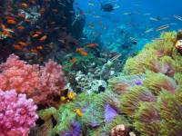Reefdancer Glass Bottom Boat Tour – 90 minute - Hawaii Discount