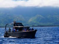 North Shore Shark Adventures - Turtle Snorkel Tour - Hawaii Discount