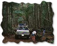 Full Day Trekker 4x4 - Hawaii Discount