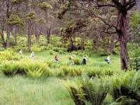 Hawaii Forest & Trail - Hakalau Wildlife Refuge Birdwatching Adventure - Hawaii Discount