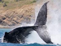 Pacific Whale Foundation - Whale Watch Lahaina or Ma'alaea - Hawaii Discount